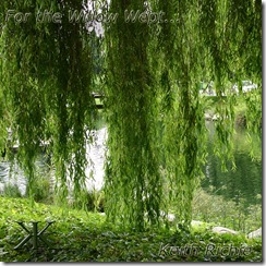 For the Willow Wept...