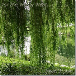 For the Willow Wept…
